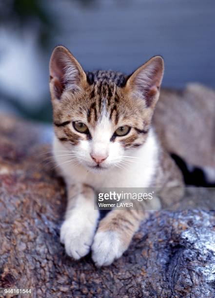Hauskatze liegt auf einem Baumstamm
