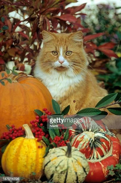 hauskatze - pumpkin cats stock pictures, royalty-free photos & images