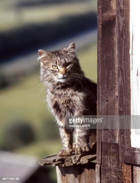 Hauskatze sitzt auf einem Fensterbrett