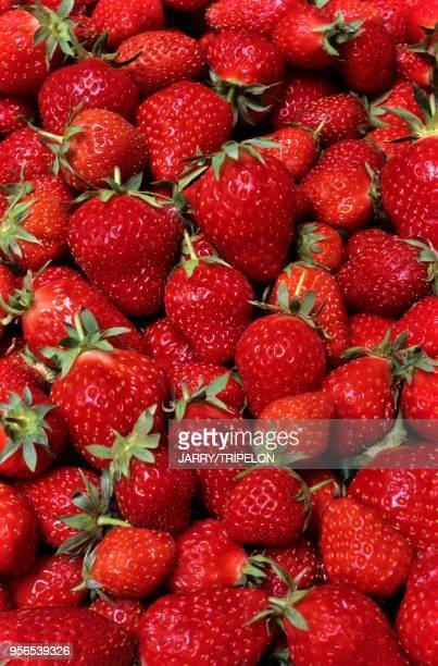 HauteSavoie fraises//France HauteSavoie strawberries