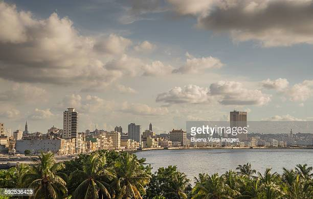 Havana, palms and city skyline