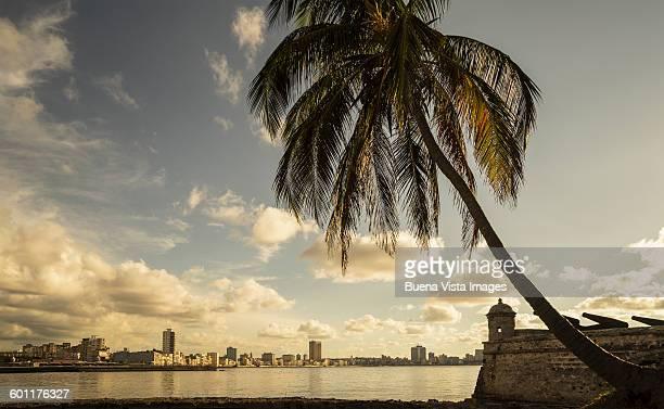 havana skyline. - ハバナ ストックフォトと画像