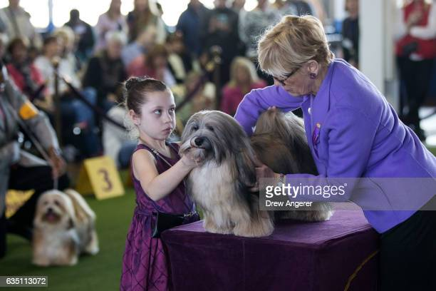 Havanese dog is judged during competition at the 141st Westminster Kennel Club Dog Show February 13 2017 in New York City There are 2874 dogs entered...