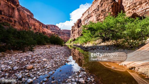havasu creek on bottom of grand canyon national park, arizona, usa - havasu creek stock photos and pictures