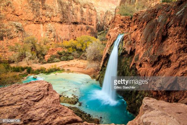 havasu falls, havasupai indian reservation, grand canyon national park, arizona, usa - category:grand_canyon_national_park stock pictures, royalty-free photos & images