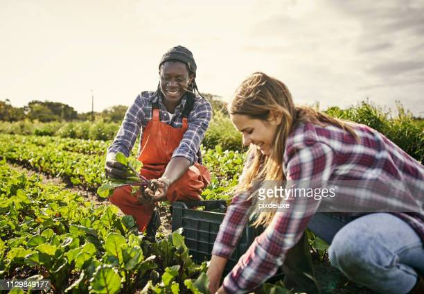 have you joined the organic agriculture movement? - mixed farming stock pictures, royalty-free photos & images