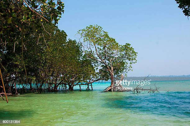 Havelock island, Andaman and Nicobar, India