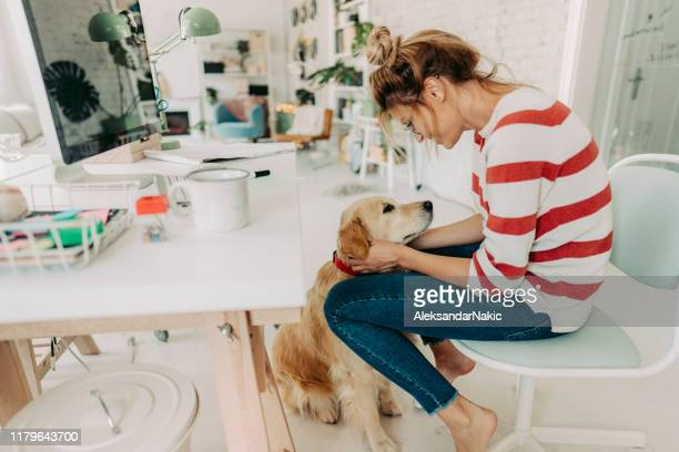 having a company while working from home office - domestic animals stock pictures, royalty-free photos & images