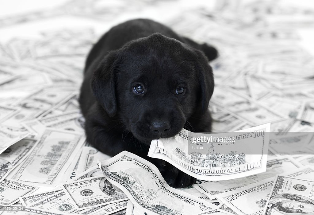 Having a pet can be expensive : Stock Photo