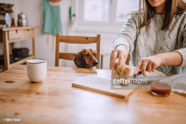having breakfast with her dachshund dog - suplicar imagens e fotografias de stock