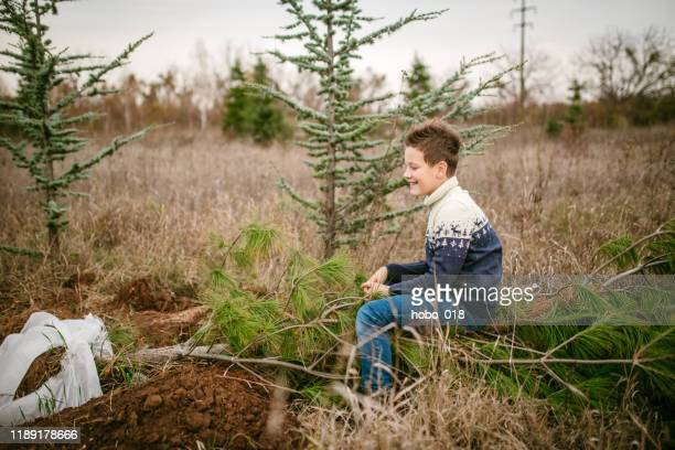 having fun in forest - tree farm stock pictures, royalty-free photos & images