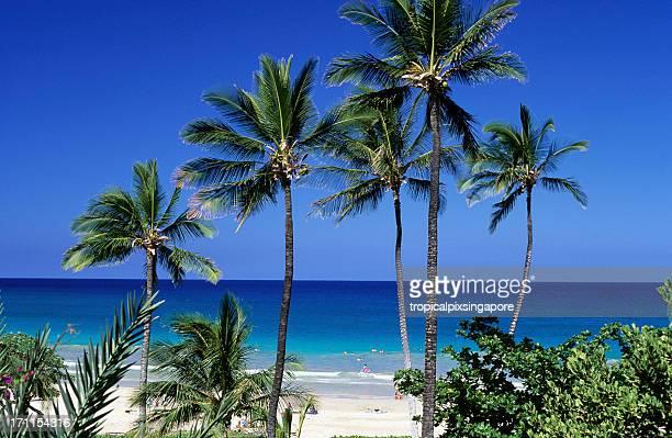 usa hawaii, big island, hapuna beach. - hapuna beach stock photos and pictures
