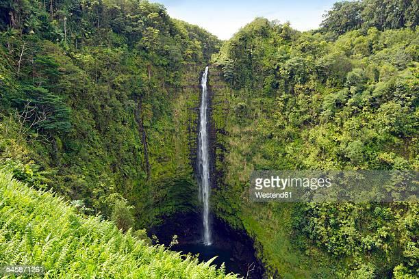 USA, Hawaii, Big Island, Honomu, Akaka Falls