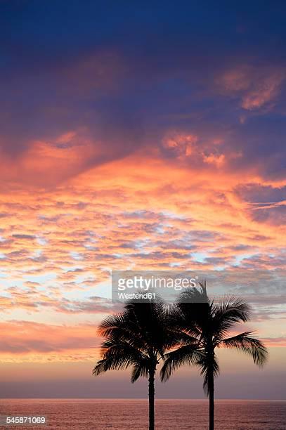 usa, hawaii, big island, kohala coast, silhouettes of two palms at sunset - hapuna beach stock photos and pictures