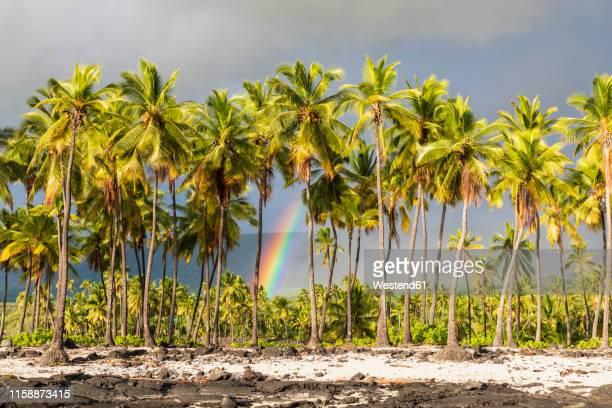 usa, hawaii, big island, pu'uhonua o honaunau national park - ハワイ島 ストックフォトと画像