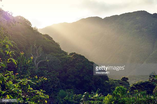 usa, hawaii, big island, waipio valley, vegetation at evening light - waipio valley stockfoto's en -beelden