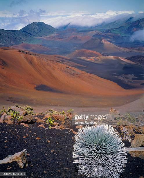 usa, hawaii, island of maui, haleakala national park, haleakala crater - argyroxiphium sandwicense - fotografias e filmes do acervo