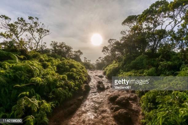 usa, hawaii, kauai, koke'e state park, pihea trail, river against the sun - %e... ストックフォトと画像