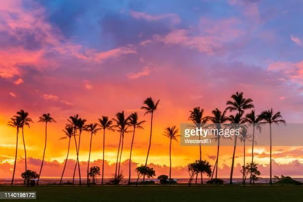 usa, hawaii, kauai, pacific ocean, kapa'a beach park, palms at sunrise - kapaa beach park ストックフォトと画像