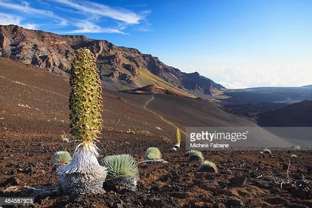 USA, Hawaii, Maui, Haleaka National Park