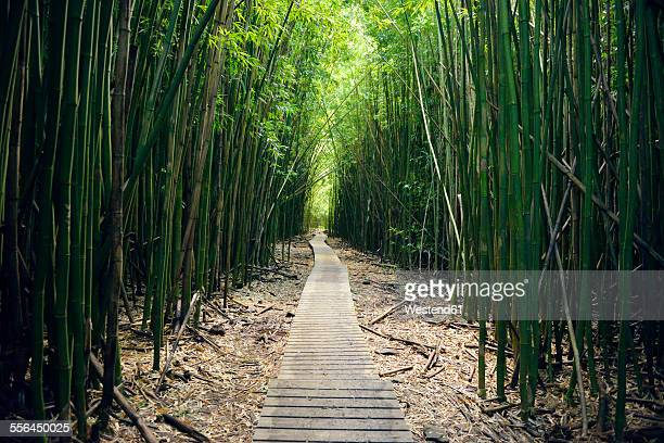 usa, hawaii, maui, haleakala national park, bamboo forest at pipiwai trail - bamboo forest stock photos and pictures