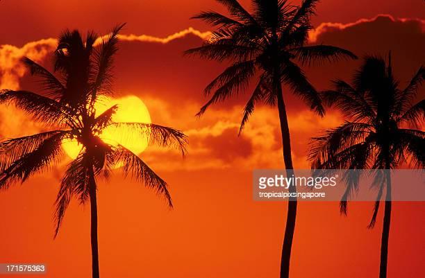 USA Hawaii O'ahu, Honolulu, sunset at Ala Moana Park.