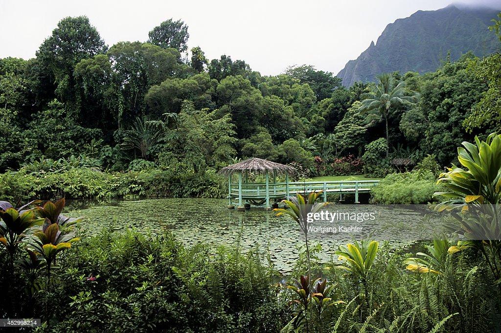 USA Hawaii Oahu Kaiula Haiku Gardens Lily Pond