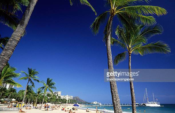 米国ハワイ o'ahu 、ワイキキビーチ、ココヤシます。 - ダイヤモンドヘッド ストックフォトと画像