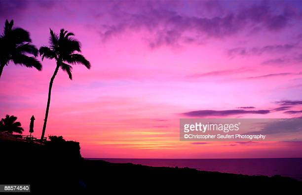 Hawaii sunset with palm tree