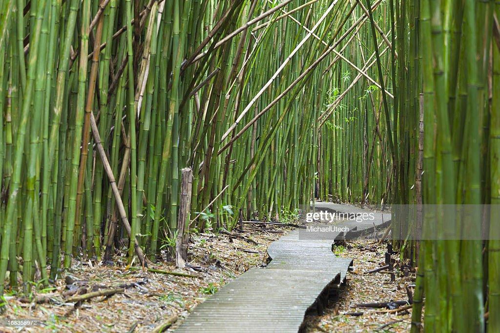 Hawaiian Bambuswald Maui Stock Foto Getty Images
