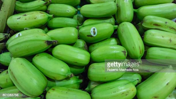 Hawaiian green bananas as produce in a Miami market Heap of small fresh unripe and raw green bananas