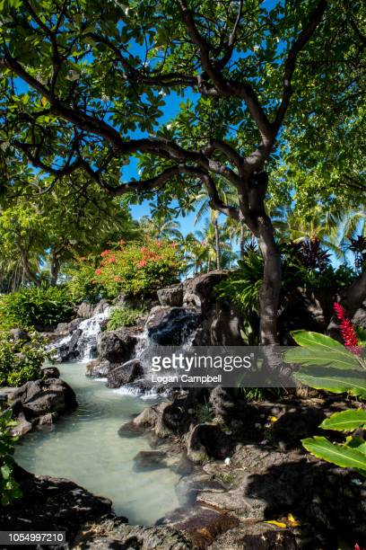 hawaiian island whaikiki beach roadside water feature waterfall - hawaiian waterfalls stock pictures, royalty-free photos & images