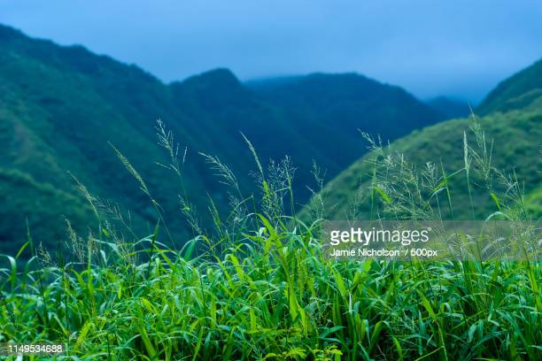hawaiian jungle, maui - jamie nicholson stock pictures, royalty-free photos & images