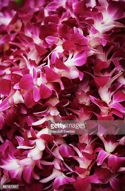 hawaiian leis - lei day hawaii stock pictures, royalty-free photos & images