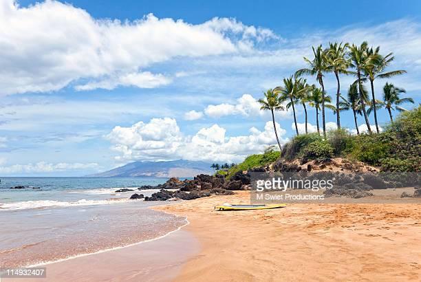 Hawaii-palm-tree-beach
