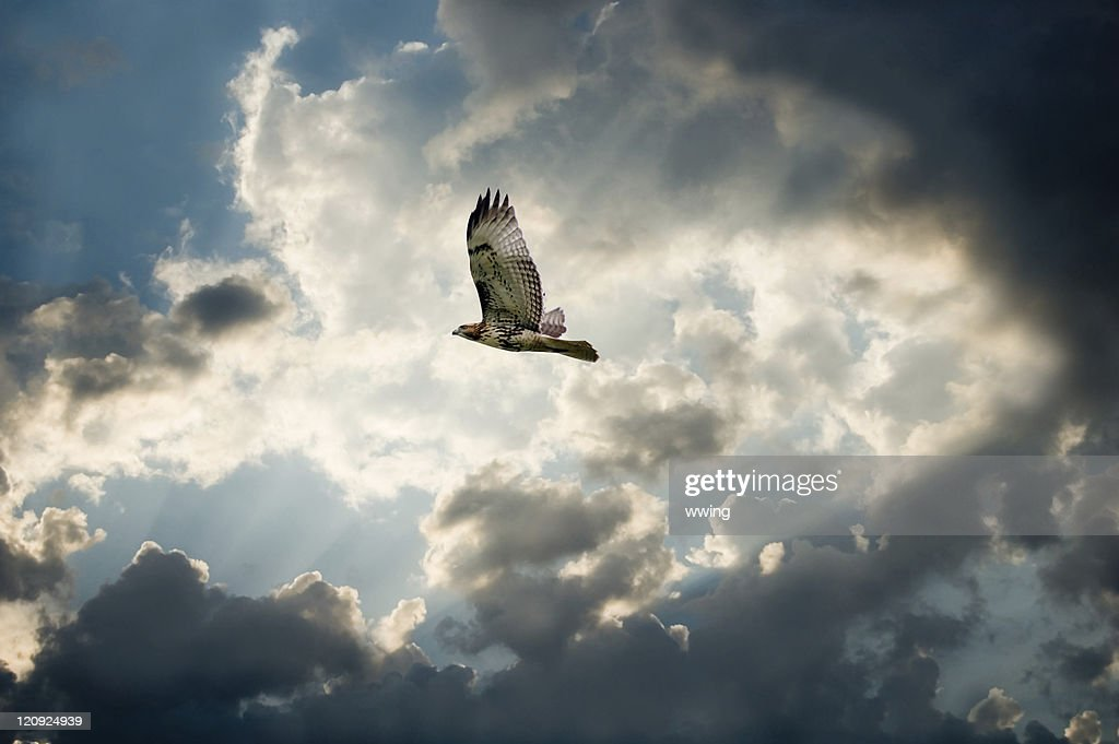 Hawk and Moody Sky with dark clouds forming : Stock Photo