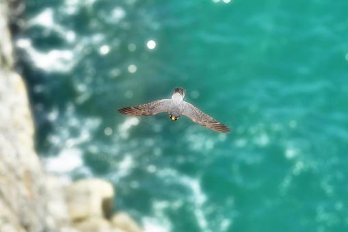 A Hawk and Ocean - gettyimageskorea
