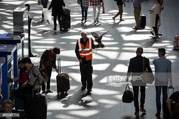 Hawk handler Max Bell walks with his Harris Hawk called Aria through the western concourse as train passengers look on and use ticket machines at...