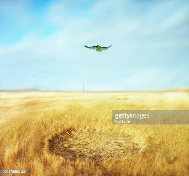 Hawk hovering in air above field (digital enhancement)