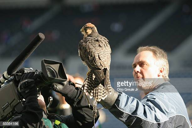 Hawk is used during pregame ceremonies at the game between the Seattle Seahawks and Buffalo Bills at Qwest Field on November 28, 2004 in Seattle,...