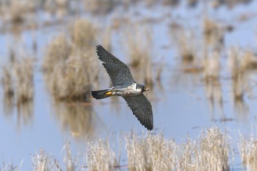 A Hawk - gettyimageskorea