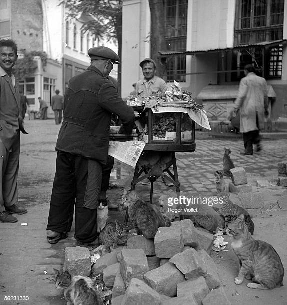 Hawker of kebab surrounded of cats. Istanbul , June 1952. RV-97711.
