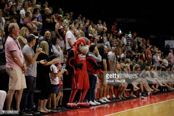 Hawks fans celebrate during the round 16 NBL match between the Illawarra Hawks and the Cairns Taipans at Wollongong Entertainment Centre on January...