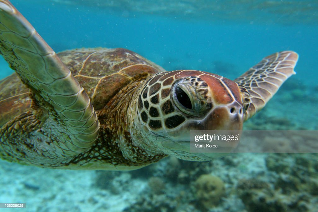 Scenes Of Lady Elliot Barrier Reef Eco Island : News Photo