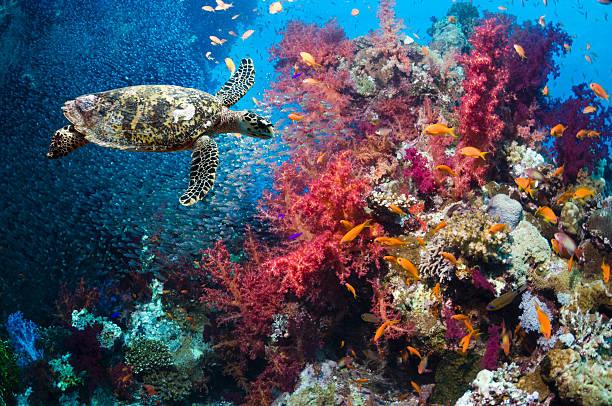 Hawksbill Turtle Wall Art