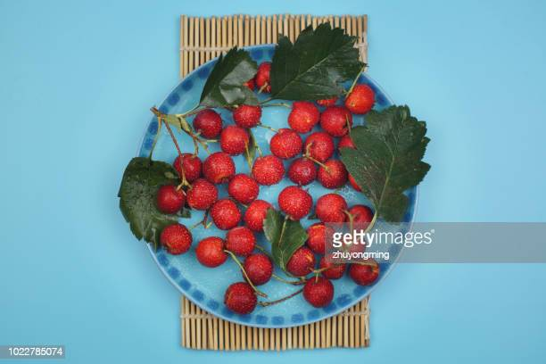 hawthorn berries - may flowers stock pictures, royalty-free photos & images