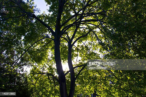 Dappled afternoon sunlight filters through the canopy of an Elm tree.
