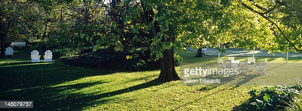 a garden table and chairs in the afternoon beneath a large elm tree. - elm tree stock pictures, royalty-free photos & images