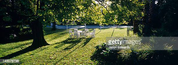 A garden table and chairs in the afternoon beneath a large Elm tree.