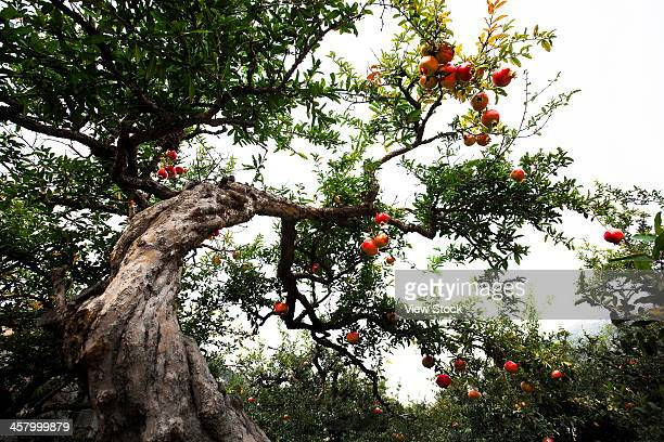 hawthorn - crab apple tree stock pictures, royalty-free photos & images